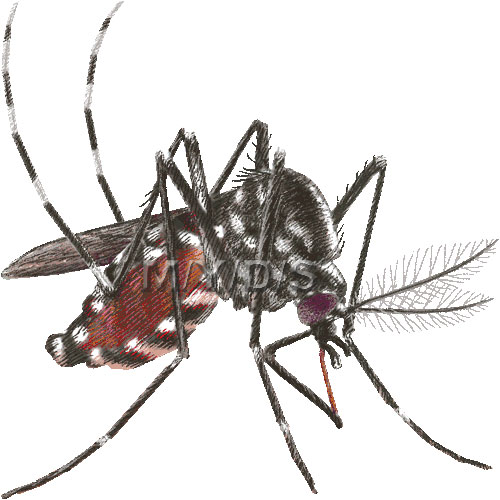Asian Tiger Mosquito Forest Day Mosquito Clipart Graphics Free
