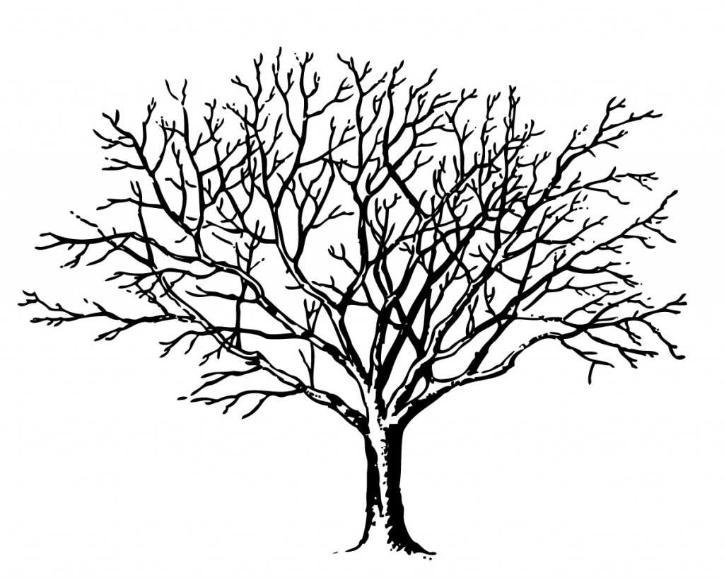 Bare Tree Clipart Black And White Free Clipart