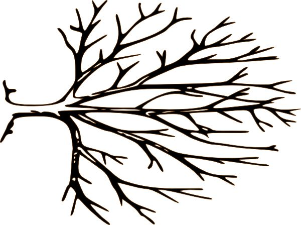Black And White Bare Tree Clipart Free Clipart
