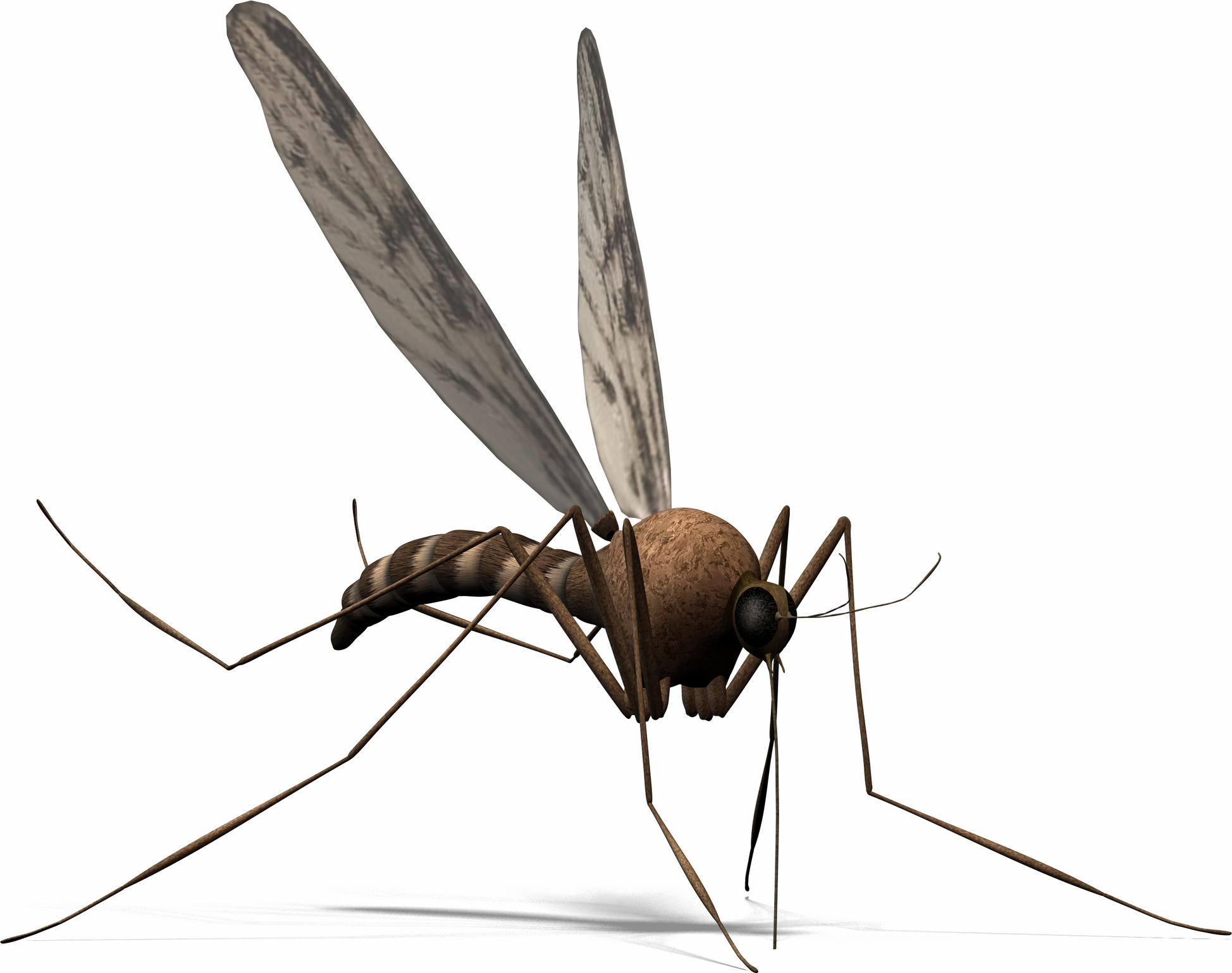 Best Mosquito Clipart #2830 - Clipartion.com