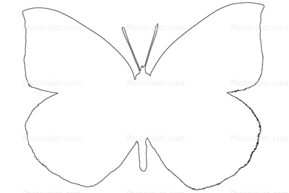 Butterflies Wings Butterfly Outline Line Drawing Images