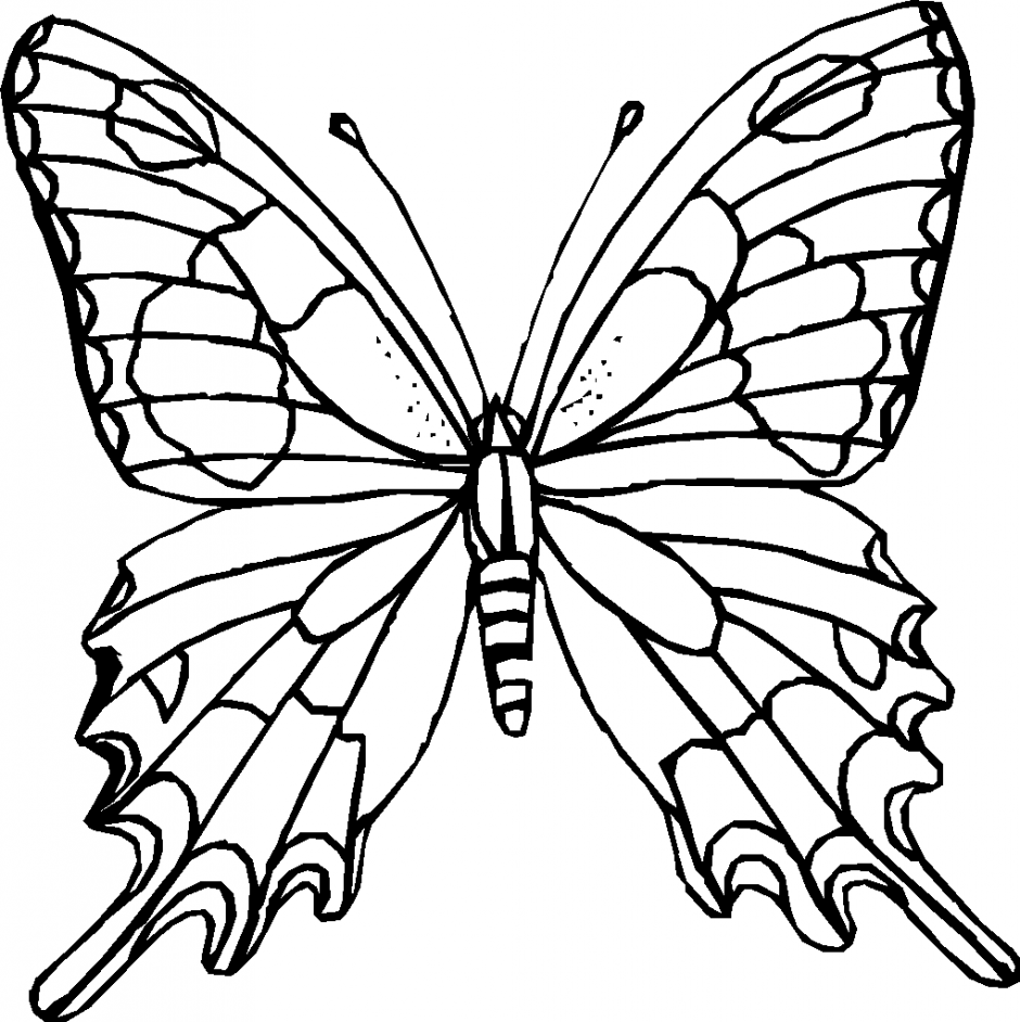 Butterfly Flying Outline Img Need