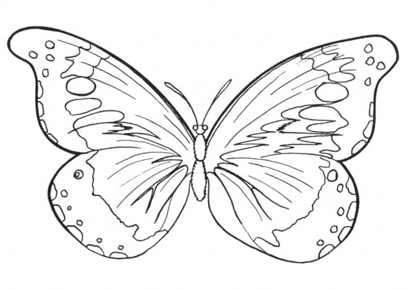 Butterfly Outline Patterns Free Craft Patterns