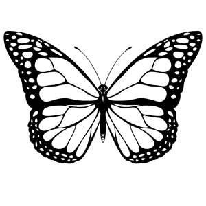 Butterfly Outline Clipartion