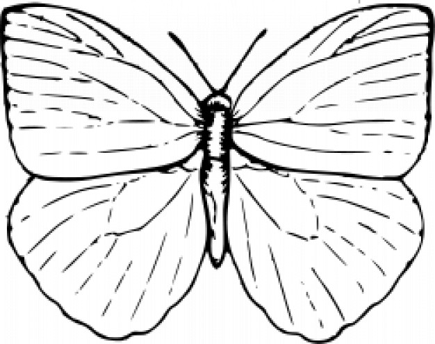 Butterfly Outline Vector Free Download
