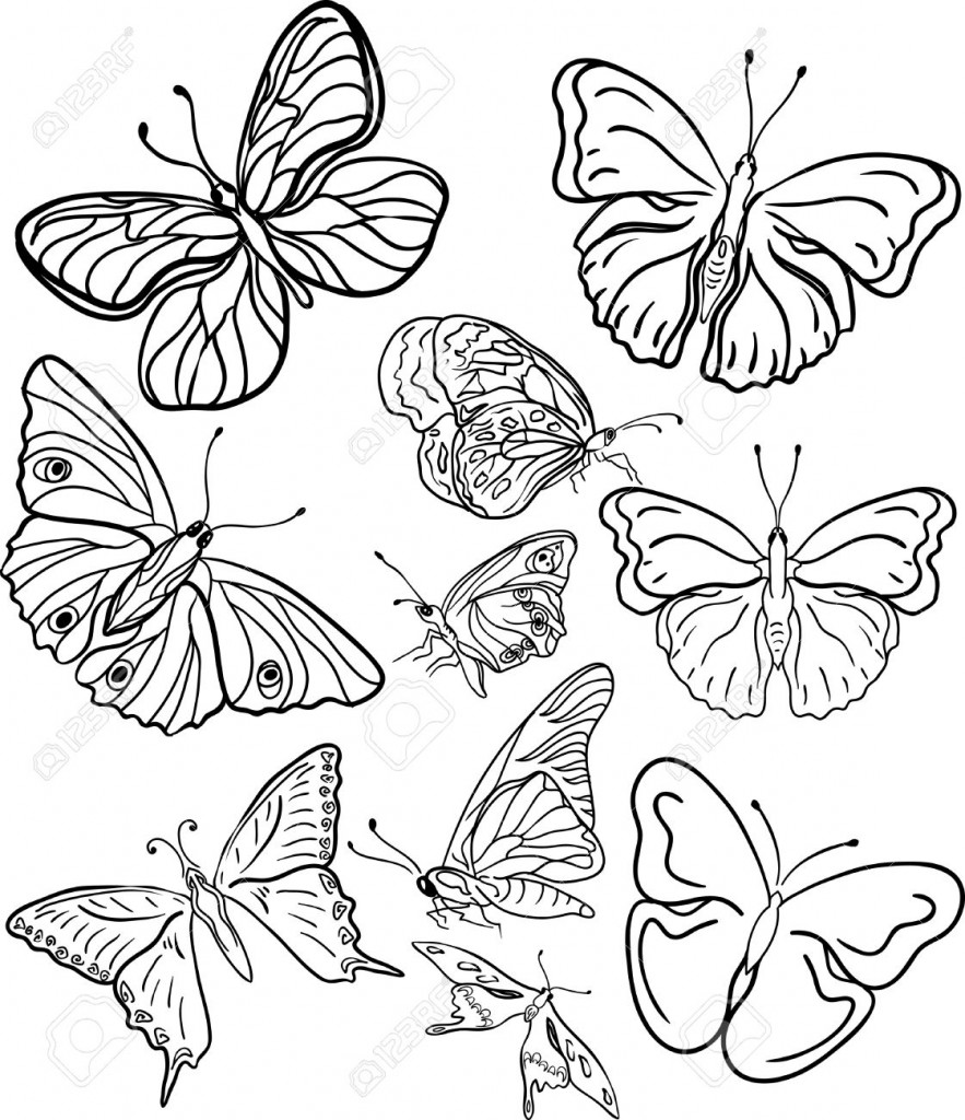 Butterfly Profile Outline Images