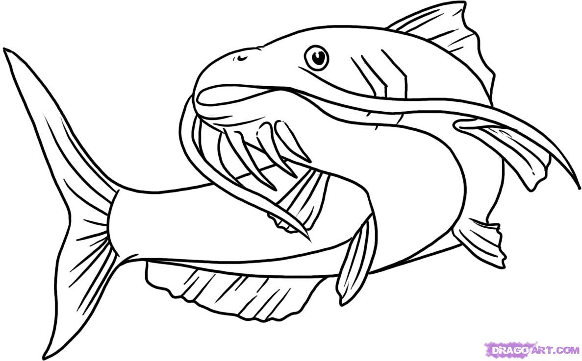 Best Catfish Clip Art #601