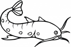 Catfish Coloring Pictures Super Coloring