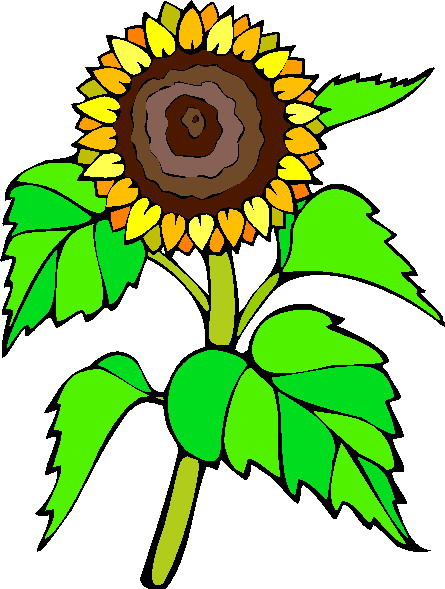 Clip Art Clip Art Sunflower
