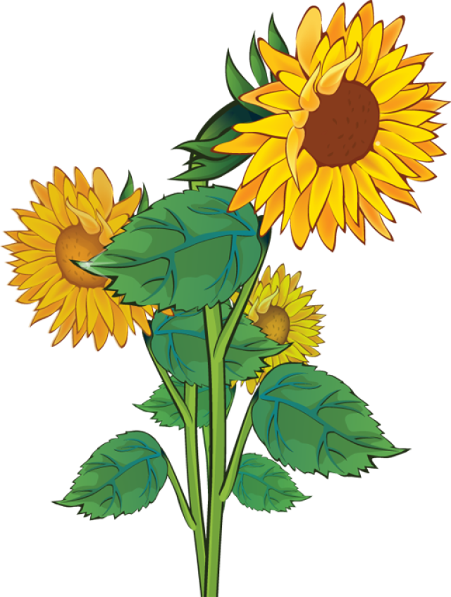 Clip Art Of Sunflower And Lily Of The Valley Clipart