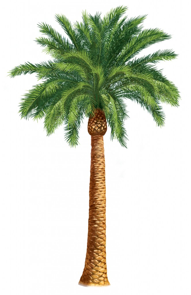 Clip Art On Pinterest Clip Art Free Art Nouveau And Palm Trees