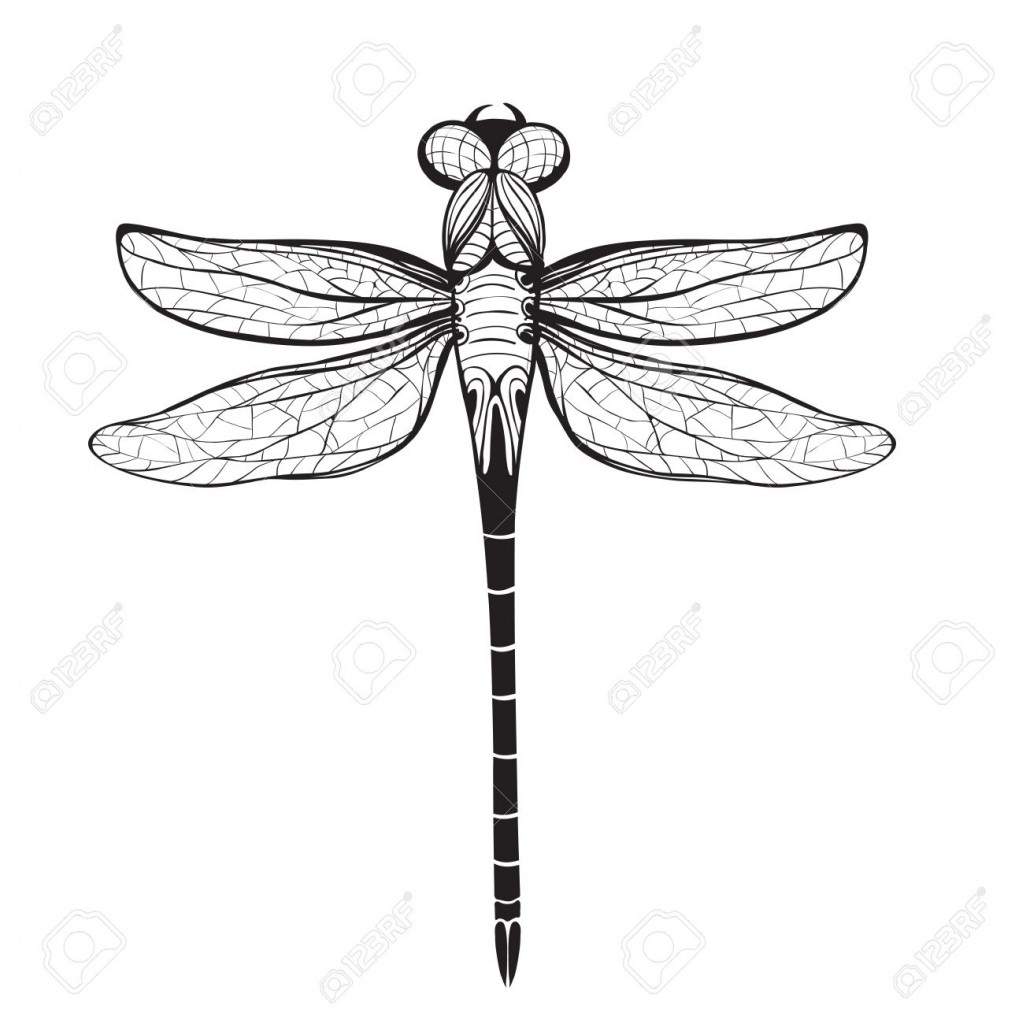 Dragonfly Insect Black Inky Drawing Flying Adder One Color Outline