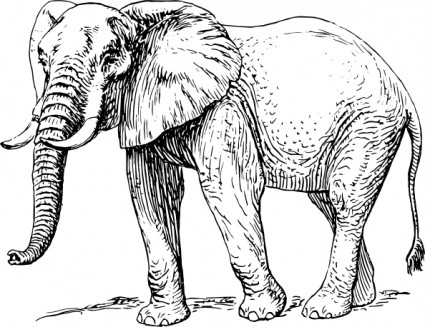 Elephant Outline Clip Art Free Vector In Open Office Drawing