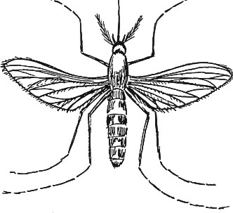 Best Mosquito Clipart #2807 - Clipartion.com