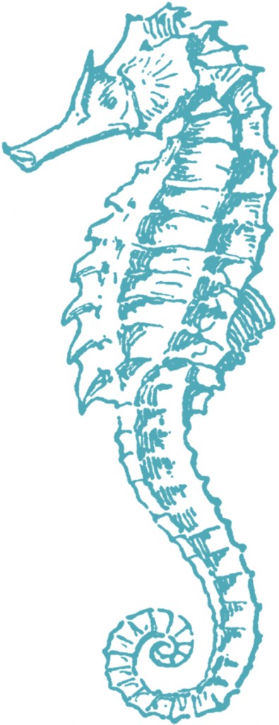 Free Sea Horse Clip Art The Graphics Fairy