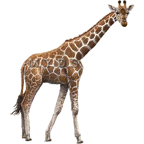giraffe clipart clipartion com new home clipart images new home clipart quotes
