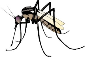 Best Mosquito Clipart #2834 - Clipartion.com