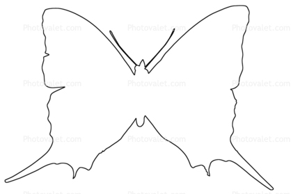 Outline Butterfly Wings Line Drawing Images Photography Stock