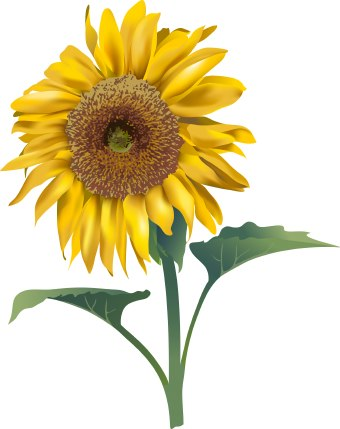 Parten Blog Sunflower Clipart