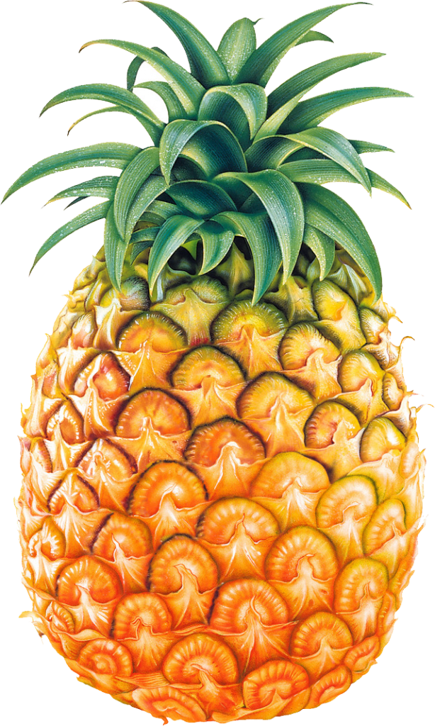 Best Pineapple Clipart #3192 - Clipartion.com