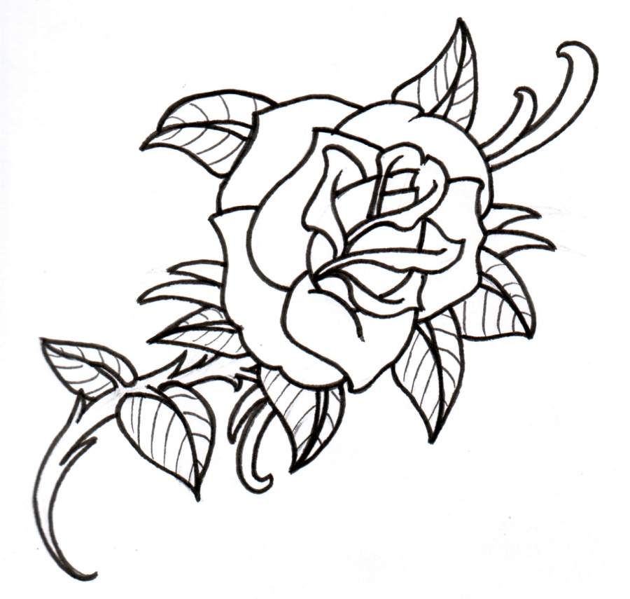 Rose Outline Drawings