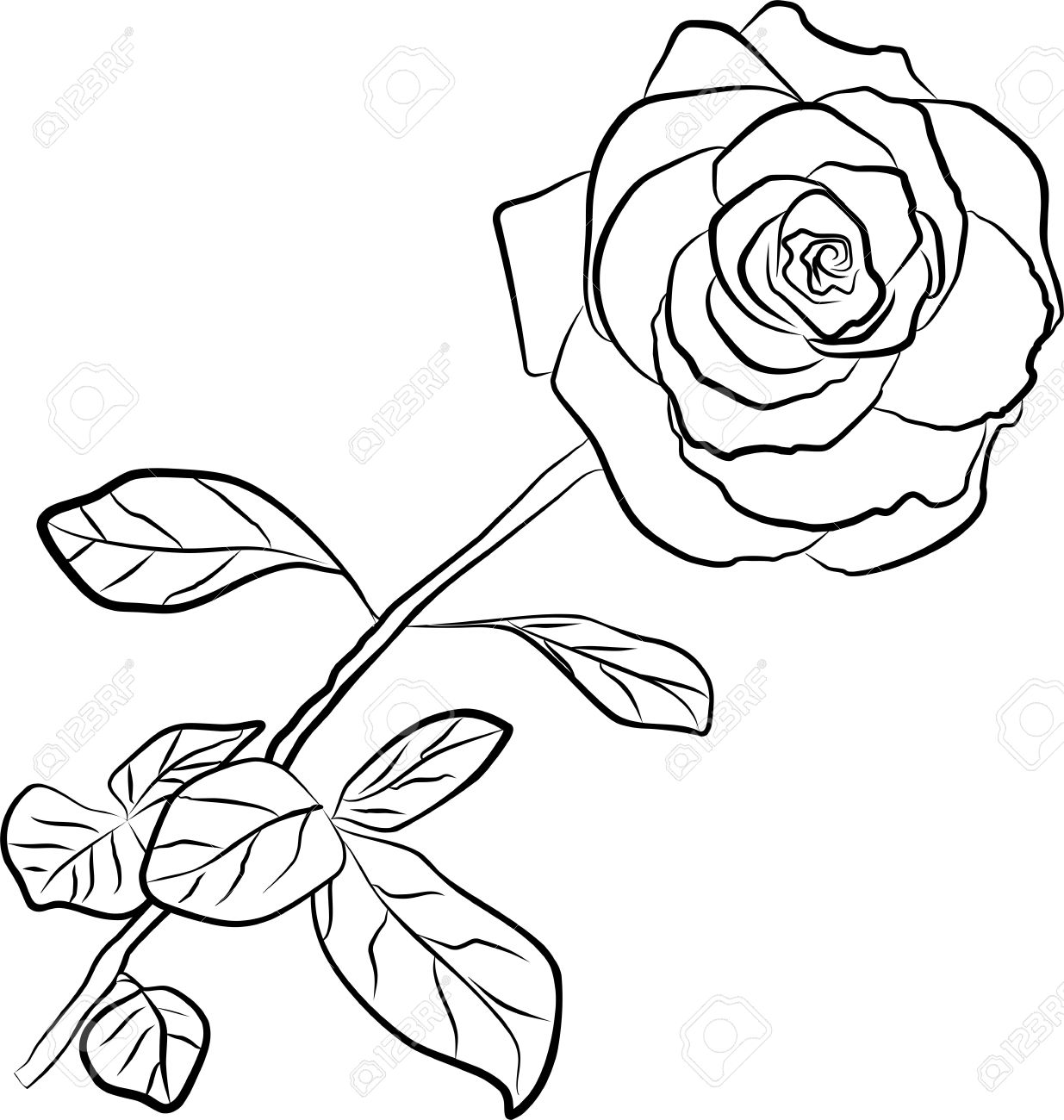 Line Art Rose Flower : Knumathise rose clip art outline images