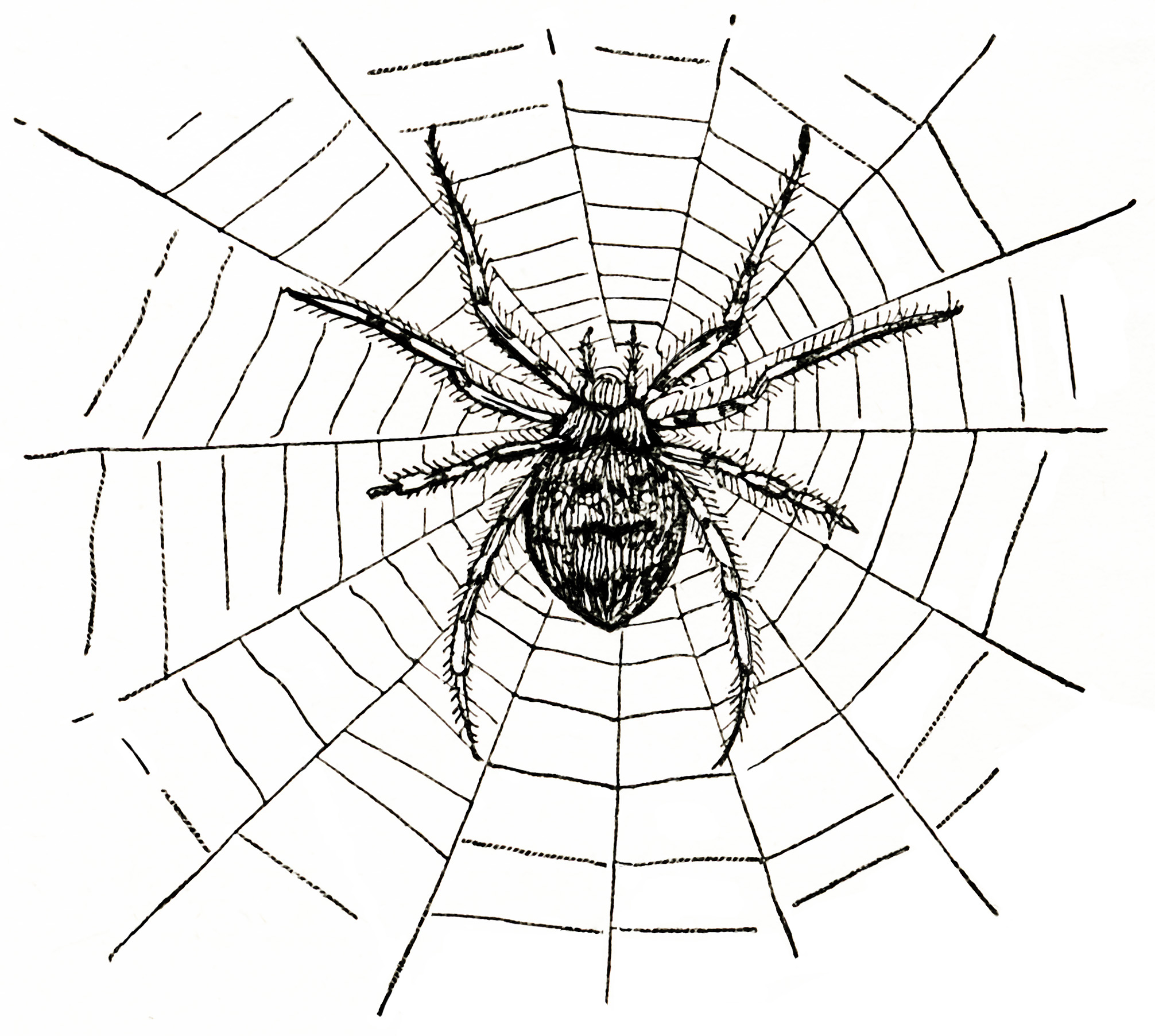 Spider Web Clip Art Black And White Home Design Websites Free