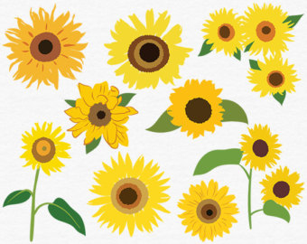 Sunflower Clip Art Etsy