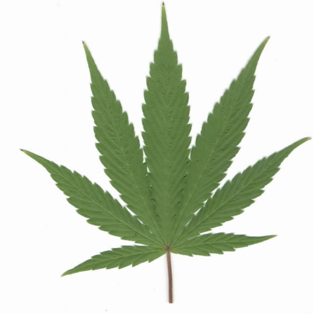 Weed Plant Logo The Biology Degree Clipart Free Clip Art Images