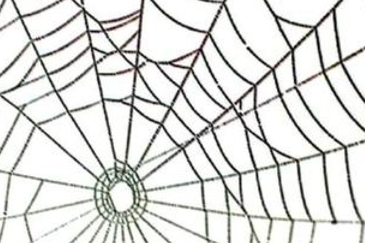 White Spider Web Clipart Free Clip Art Images