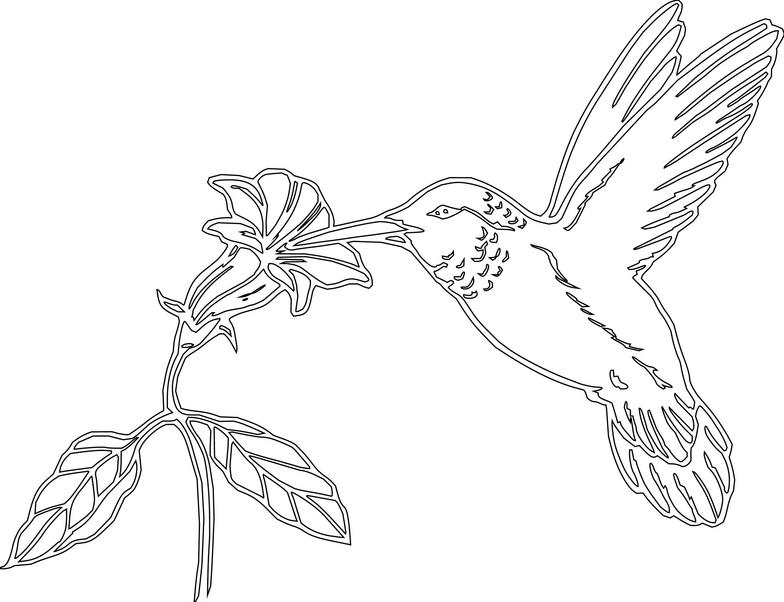 Hummingbird Clipart Clipartion Com
