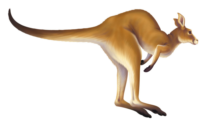 Animated Kangaroo Clipart Free Clip Art Images