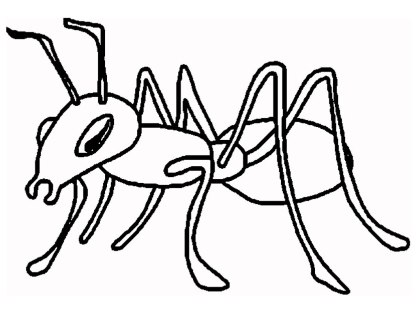 Ant Clipart Bl Free Clipart Images