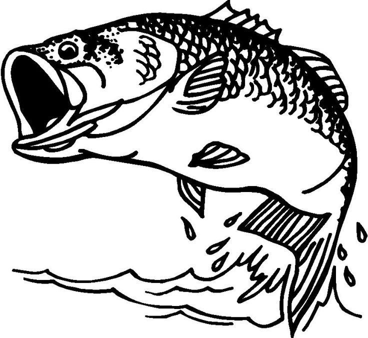Bass Fish Clip Artbass Fish Clipart From Votes Quoteko Oghw6j4v