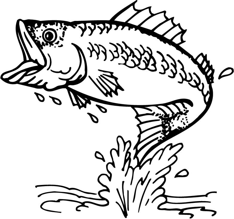 Bass Fish Clipart Images Amp Pictures Becuo
