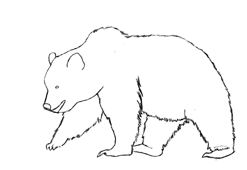 Bear Outlines Az Coloring Pages