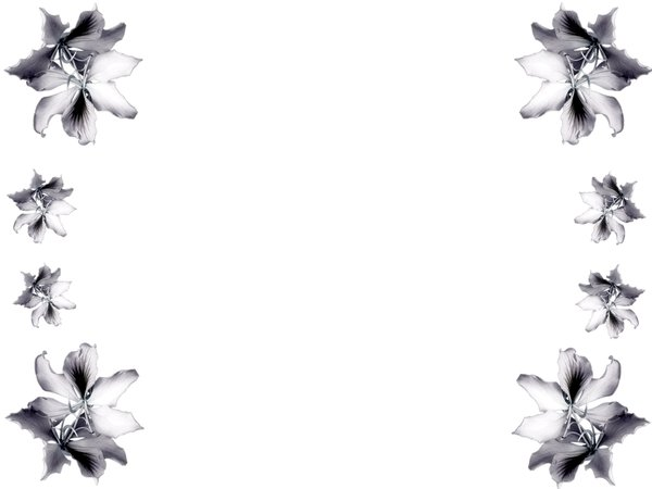 Black And White Flower Border Clipartion Com
