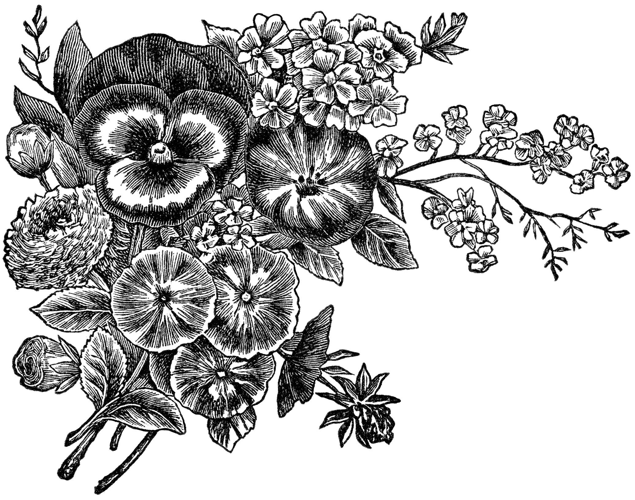 Best Flower Clipart Black And White 13567 Clipartion