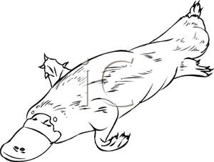 Black And White Fat Platypus Royalty Free Clipart Picture