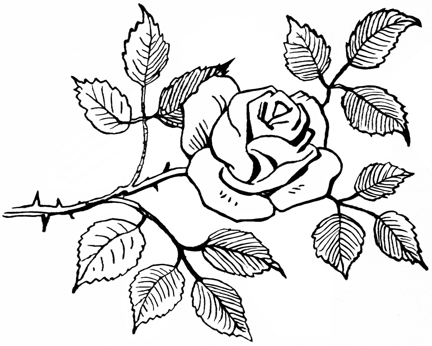 Best Flower Clipart Black And White 13581 Clipartion