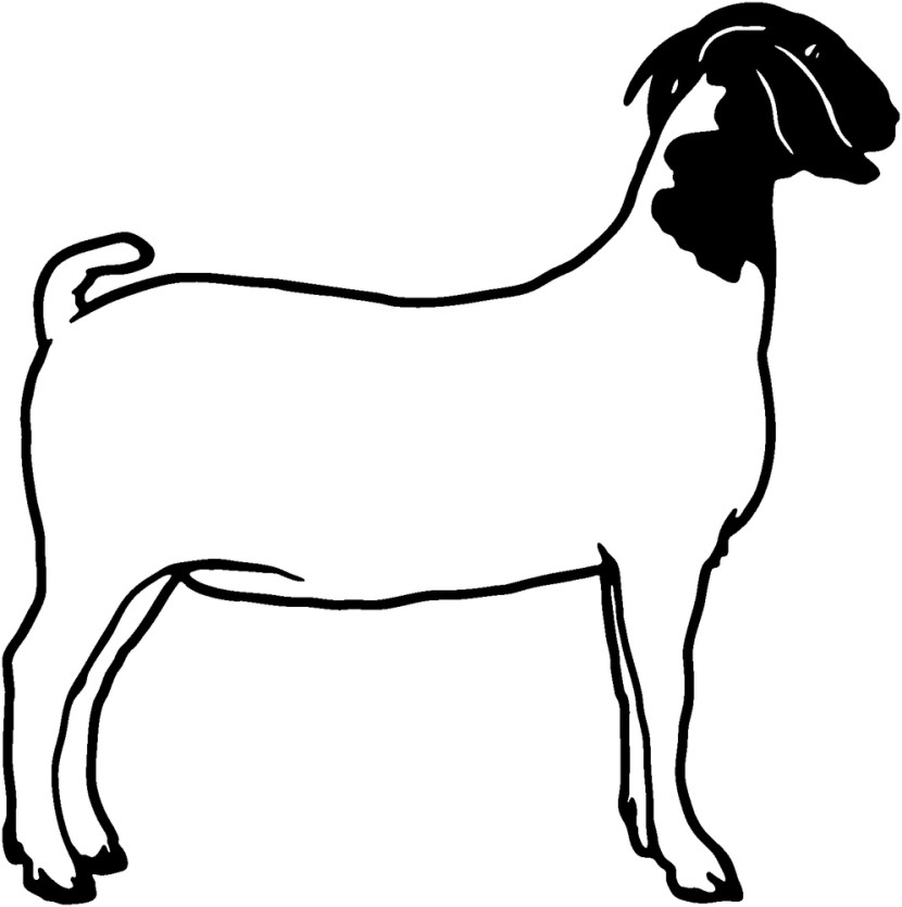 Boer Goat Clip Art - Clipartion.com