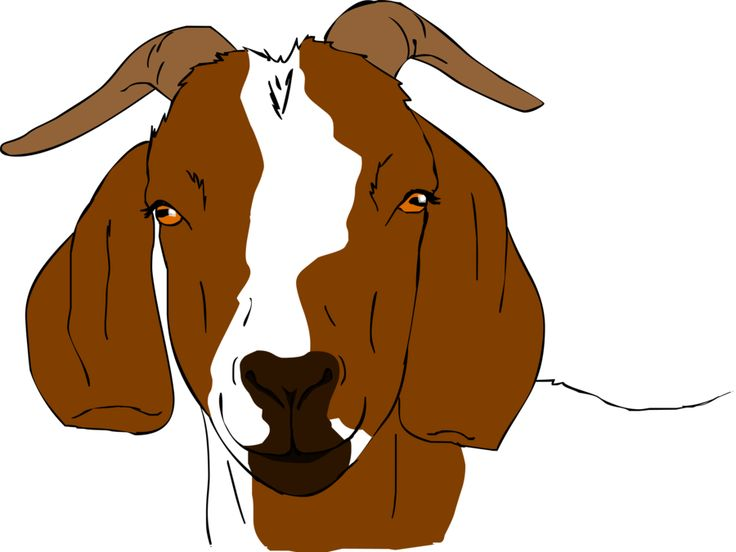 Boer Goats On Pinterest Goats Clip Art And Baby Goats