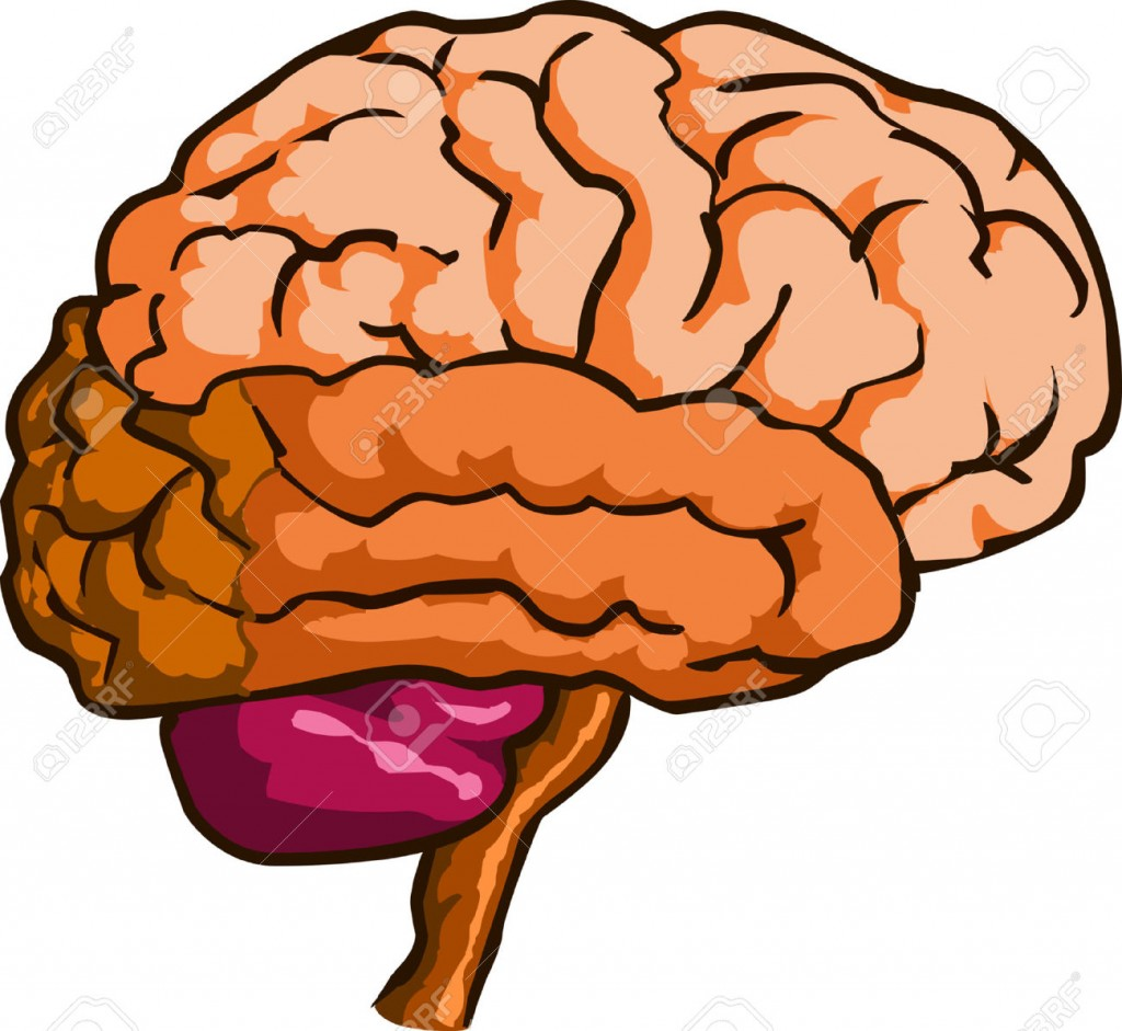 Brain Clipart Cliparts Stock Vector And Royalty Free Brain