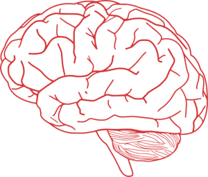 Brain Profile 2 Clipart I2clipart Royalty Free Public Domain