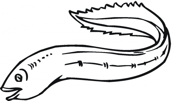 Cartoon Eel Free Clipart Images