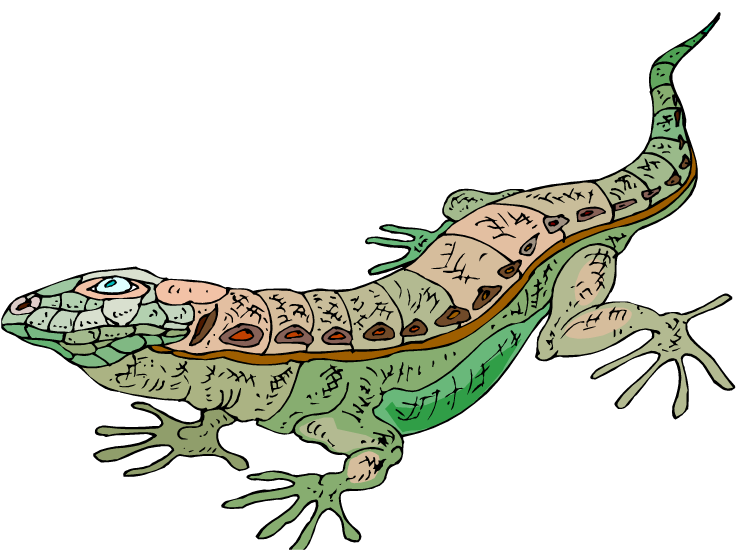 Cartoon Lizard With Glasses Clipart Free Clip Art Images
