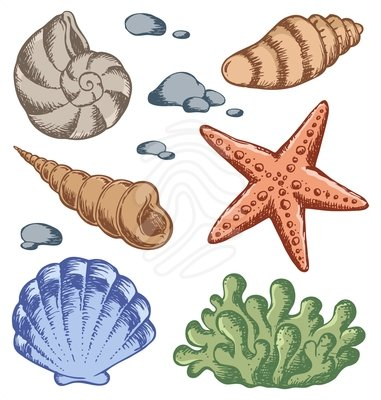 Cartoon Sea Shell Clip Art 9