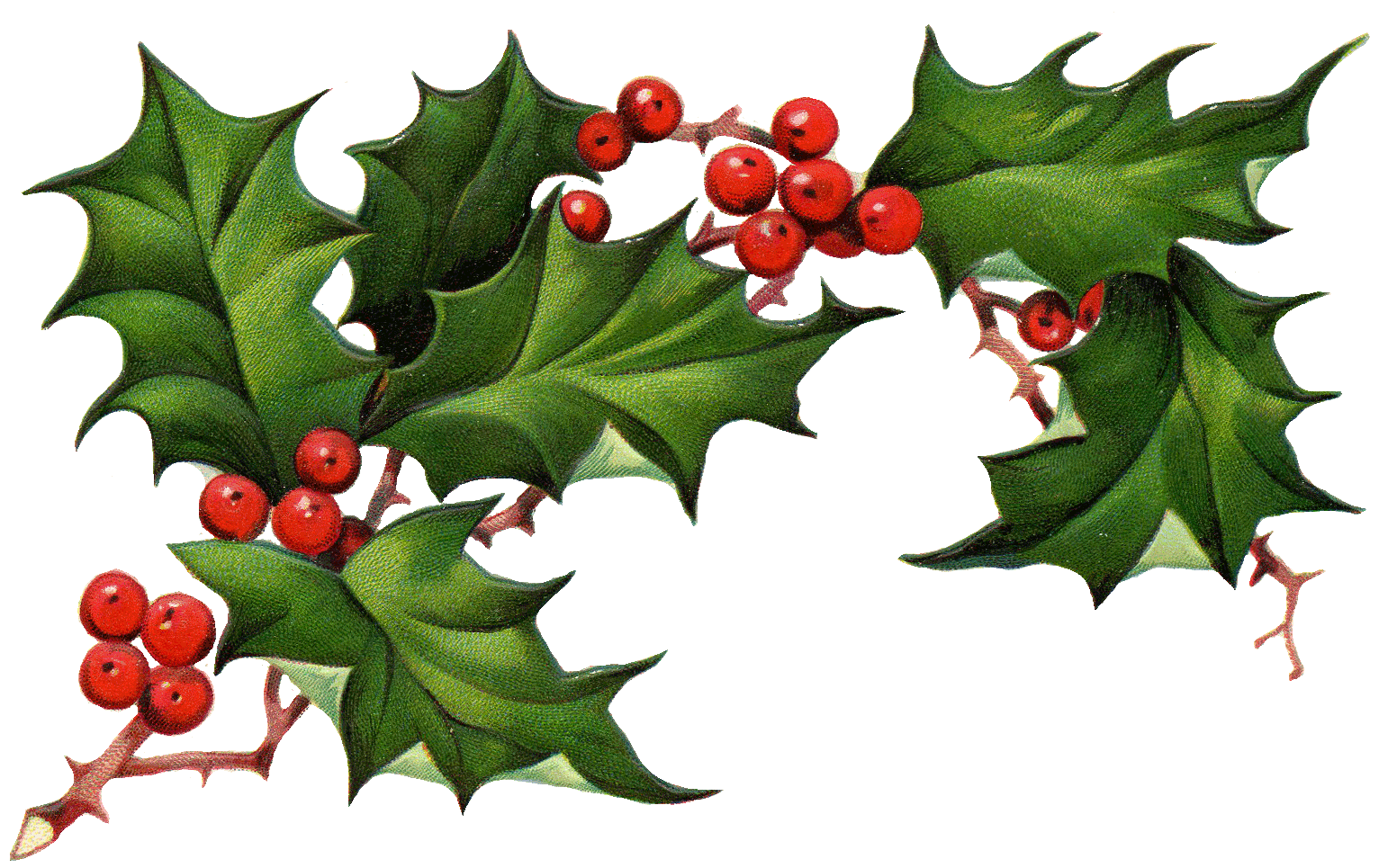 Christmas Holly Border Free Clipart Free Clip Art Images
