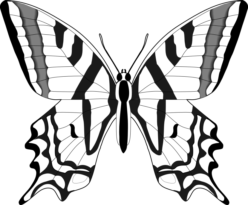 Best Butterfly Clipart...