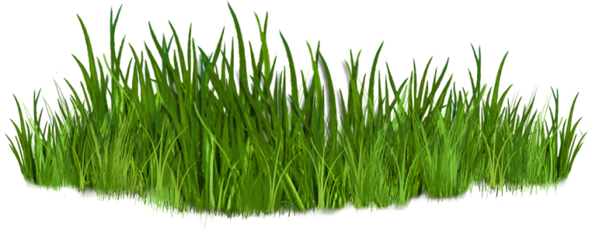 Clip Art Images Of Grasses 7 Png